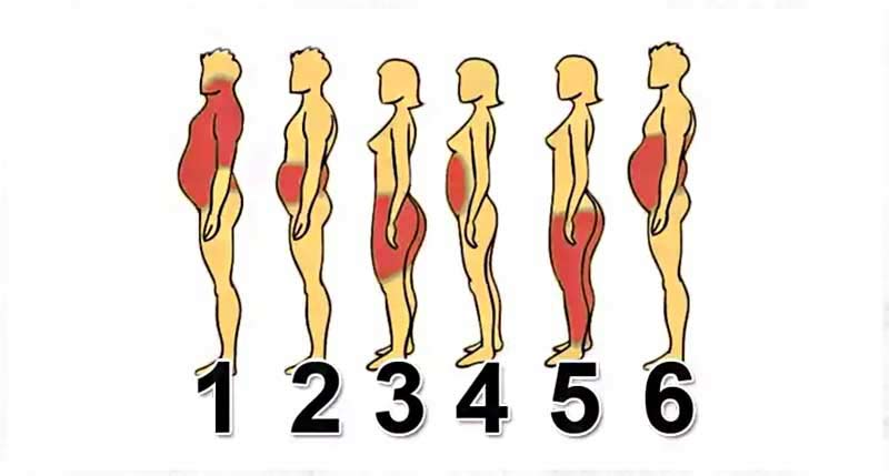 fat distribution body composition